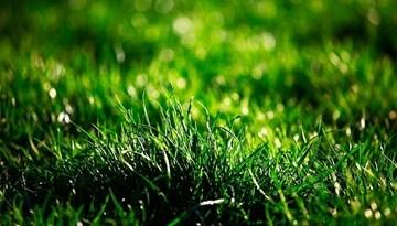 LFF rīkos semināru par dabīgo un mākslīgo zālienu futbola laukumu kopšanas jautājumiem